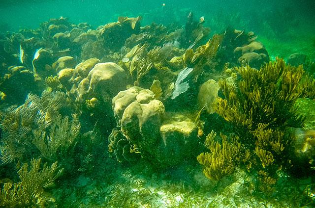 Arrecifes-Pto-Morelos-(3)