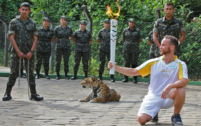 An athlete holds the Olympic Torch by a jaguar --symbol of Amazonia-- during a ceremony in Manaus, northern Brazil, on June 20, 2016.   The jaguar, who was named Juma and lived in the local zoo, had to be shot dead by soldiers shortly after the ceremony when he escaped and attacked a veterinarian despite having been hit four times with tranquilizing darts. / AFP PHOTO / Diario do Amazonas / Jair Araujo