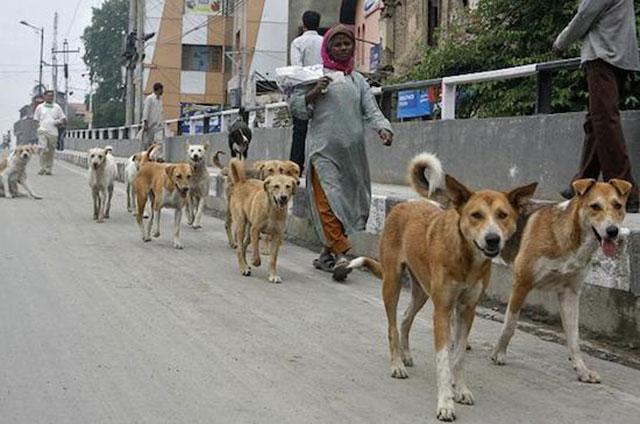 Buendiario-india-nueva-delhi-perros-callejeros-policias-2