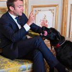Nemo,-la-mascota-del-presidente-francés-se-orina-en-plena-reunión-ministerial